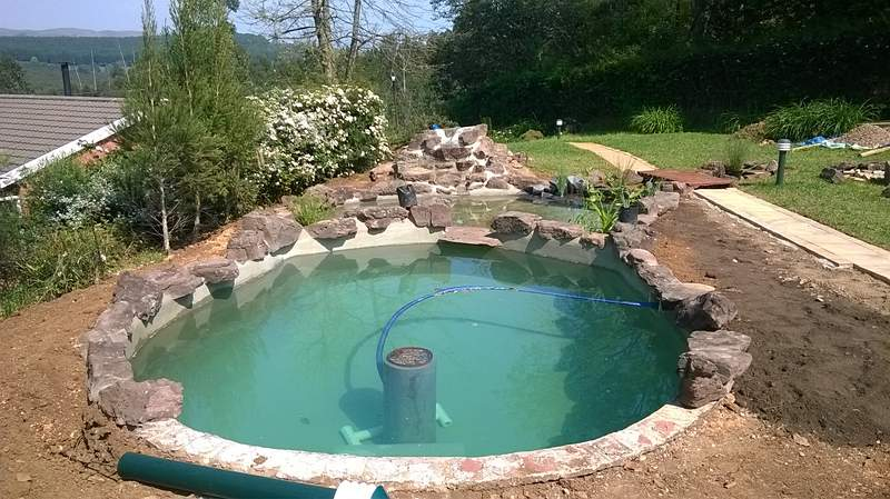 Sublime garden art convert your swimming pool into an for Swimming pool koi pond conversion